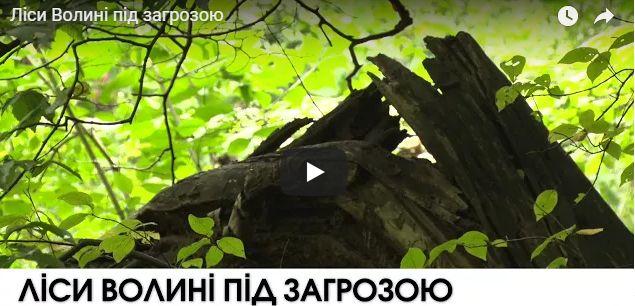 Ліси Волині під загрозою