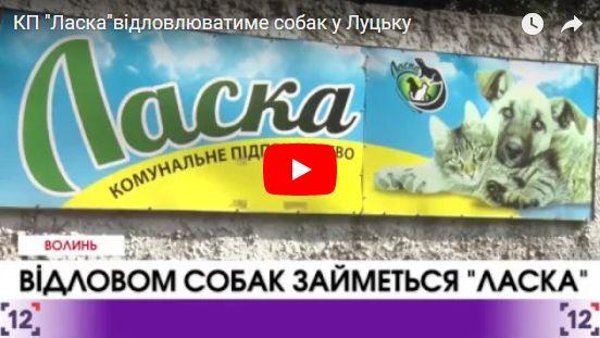 """КП """"Ласка""""відловлюватиме собак у Луцьку"""