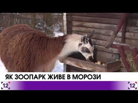 Як мешканці луцького зоопарку виживають в морози