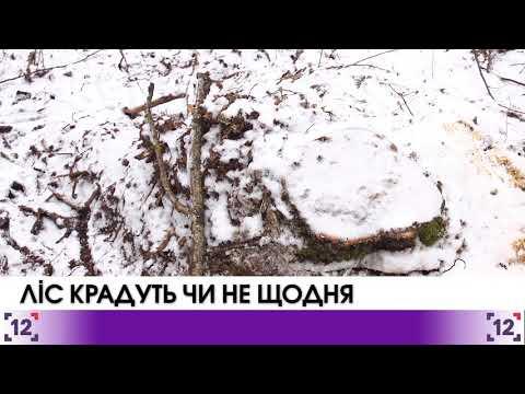 Волинський ліс крадуть чи не щодня