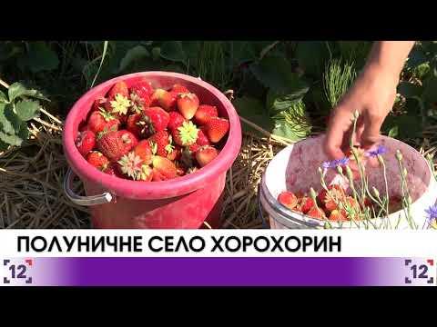 Полуничне село на Волині – Хорохорин