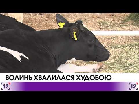 Волинь хвалилася худобою