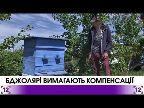 Бджолярі Турійського району вимагають компенсації