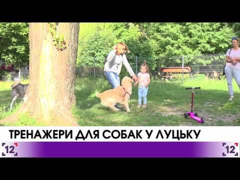 У Луцьку поставлять тренажери для собак