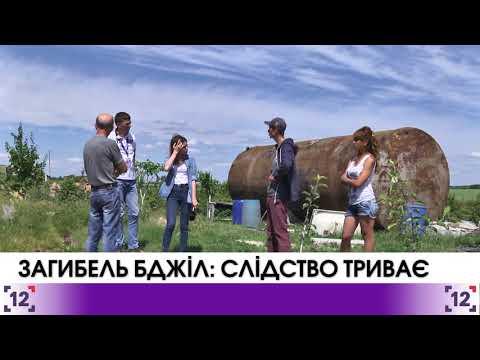 Загибель бджіл у Турійському районі: слідство триває