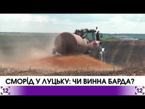 Сморід у Луцьку: чи винна барда?