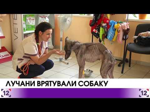 Лучани врятували собаку