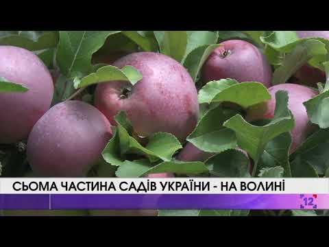 Сьома частина садів України – на Волині