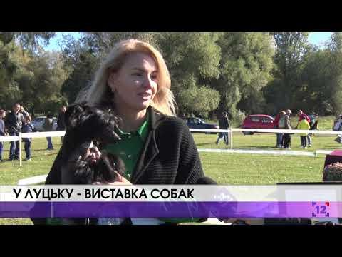У Луцьку – виставка собак
