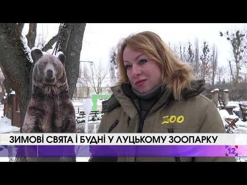Зимові свята і будні у Луцькому зоопарку