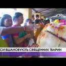 Індуси вшановують священних тварин