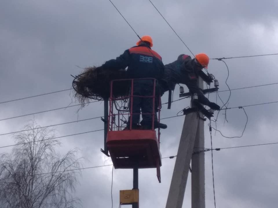 Волинські енергетики облаштували гнізда для лелек. ФОТО