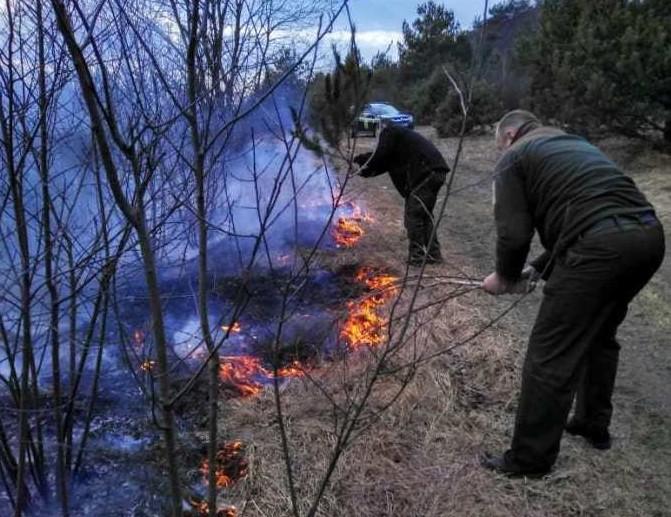 Масштабна пожежа на Волині: вигоріло 30 гектарів землі