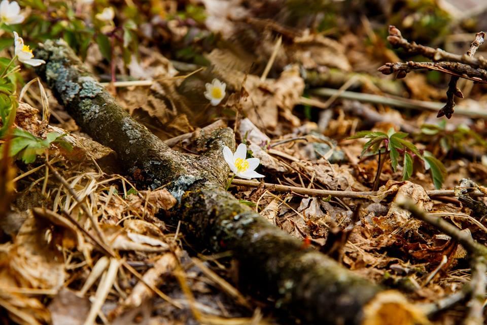 Весняний ліс на світлинах волинської фотографки. ФОТО