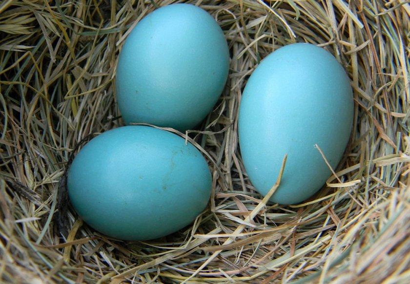 """На луцькому ринку торгують кольоровими """"диво-яйцями"""". ФОТО"""