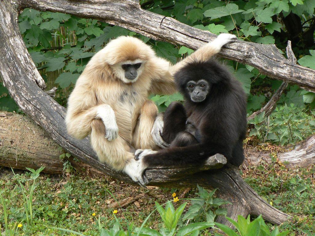 Чому не можна годувати тварин у Луцькому зоопарку