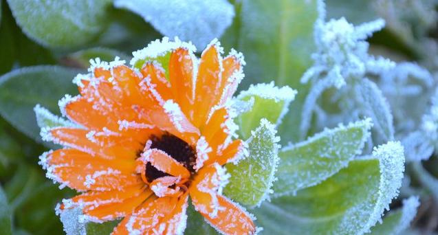 На Волині прогнозують нову хвилю заморозків