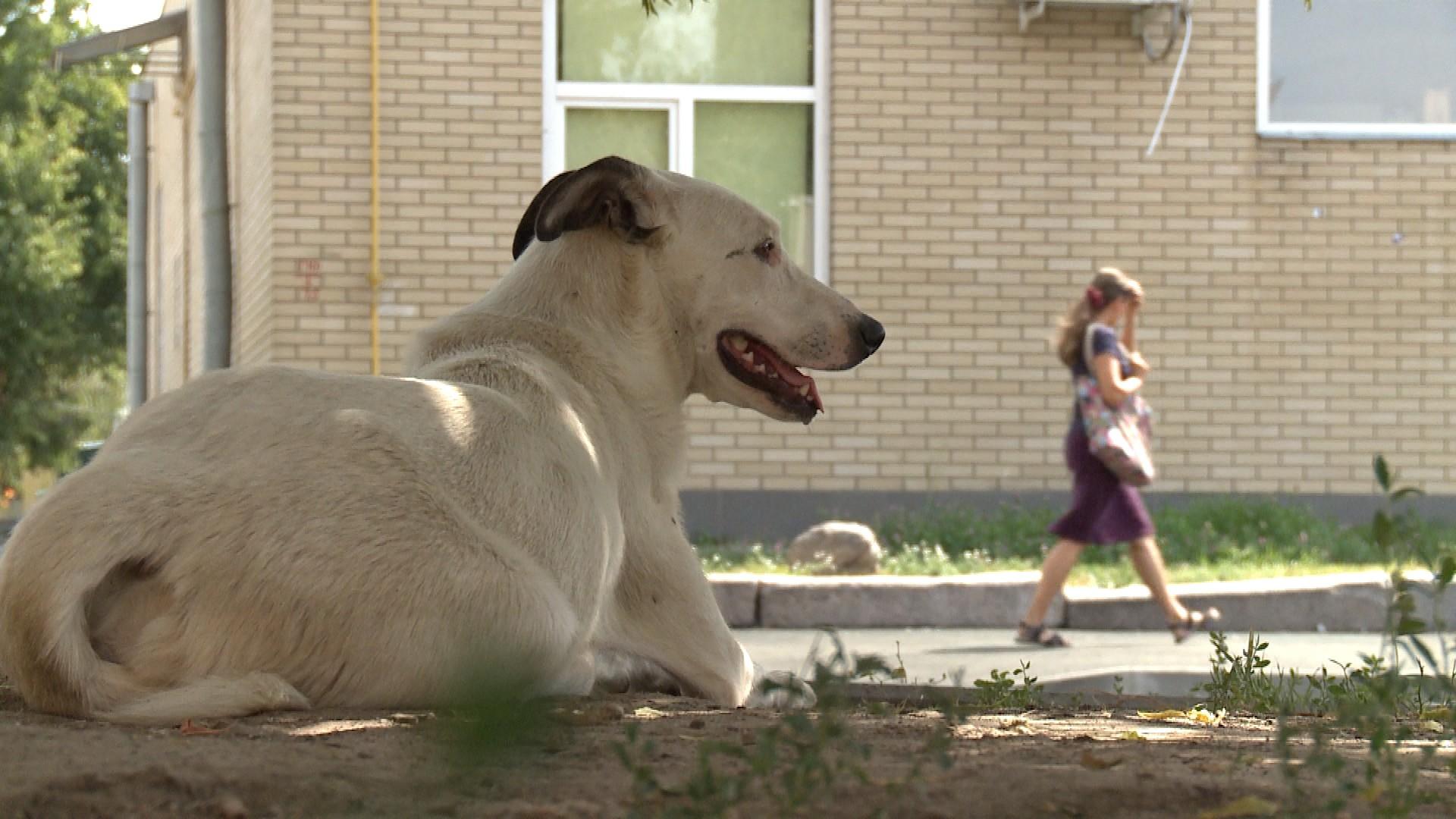 Лучан просять  порахувати бездомних тварин. Як це можна зробити