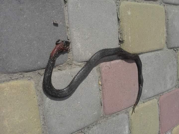 На Волині двох людей покусали змії