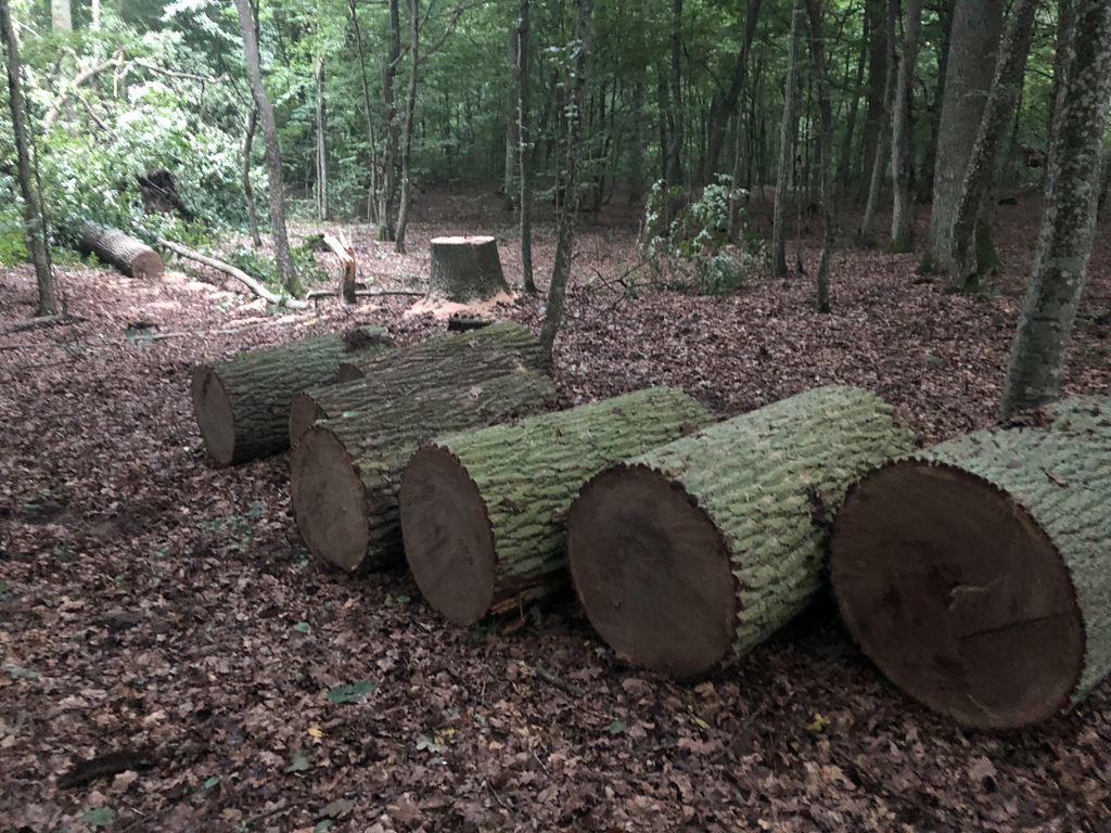 На Волині піймали чоловіків, які крали з лісу цінну деревину