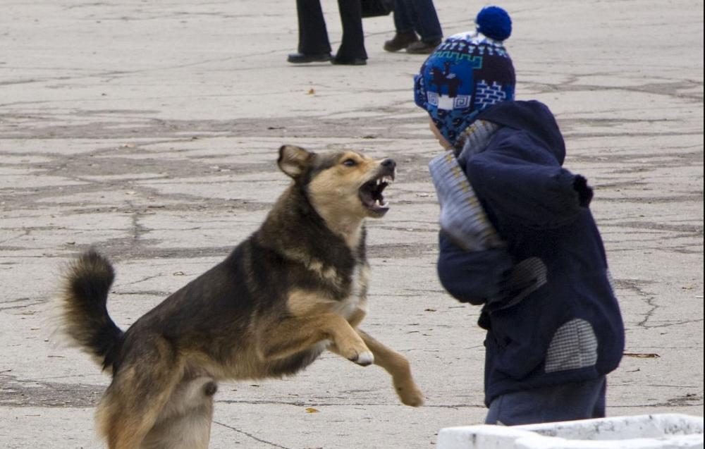 На Волині собака покусав дітей біля школи