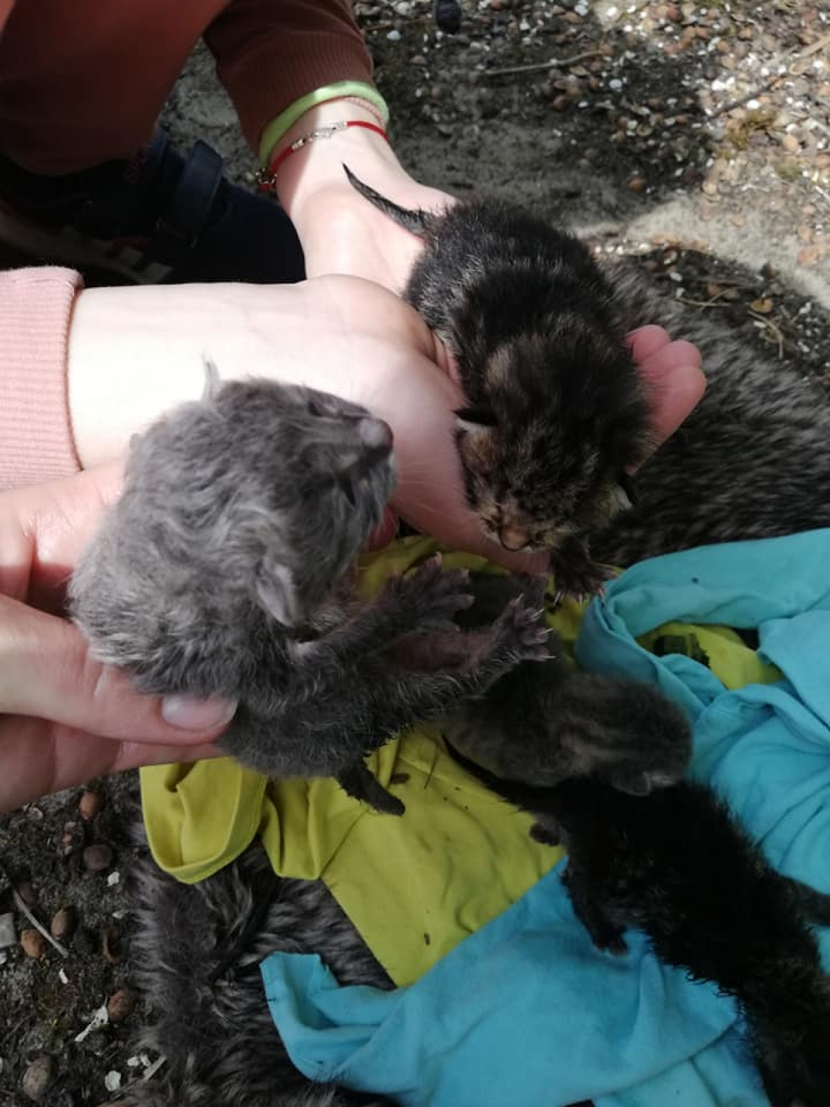 У Луцьку на смітник викинули новонароджених кошенят. ФОТО
