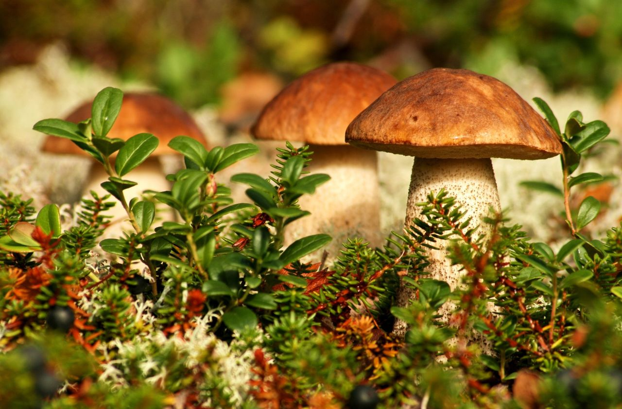 Волинянка похвалилася грибами, які знайшла у квітнику. ФОТО