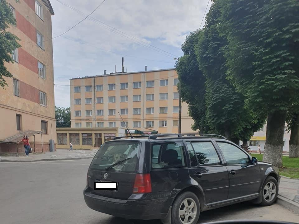У Володимирі небайдужі врятували пса, якого господар закрив в авто