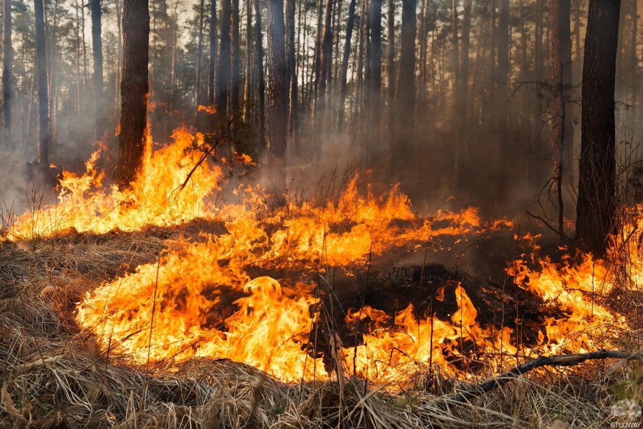 На Волині оголосили про надзвичайну пожежну небезпеку