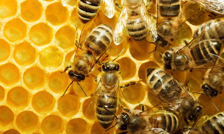 На Горохівщині масово гинуть бджоли. ВІДЕО