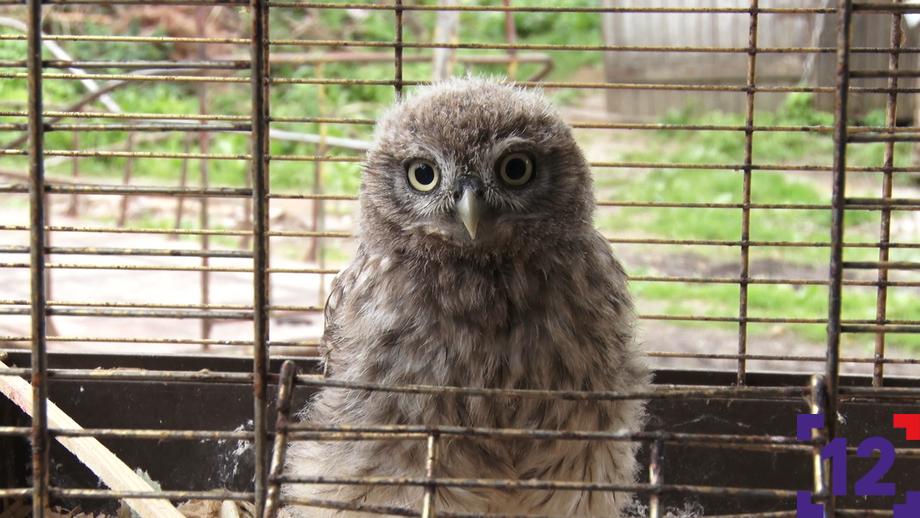 Маленький сич, совенята і лелека: як в Луцькому зоопарку виходжують пташенят. ФОТО