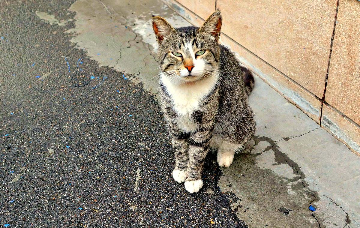 Як на ЛПЗ рятували бездомного кота