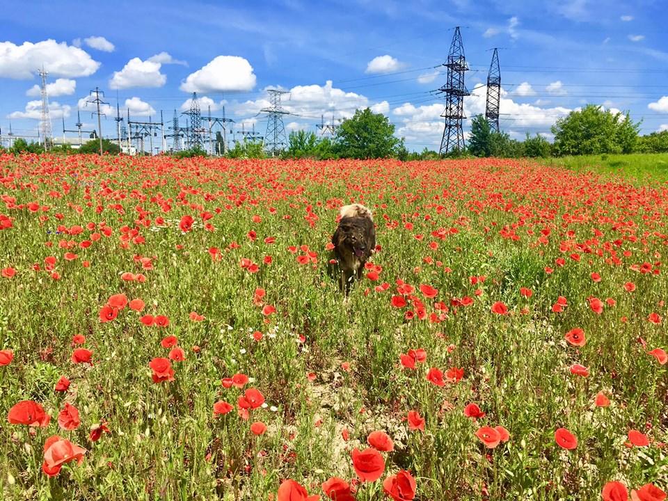 10 місяців нового життя: собака Белла з неймовірною історією досі шукає сім'ю. ФОТО