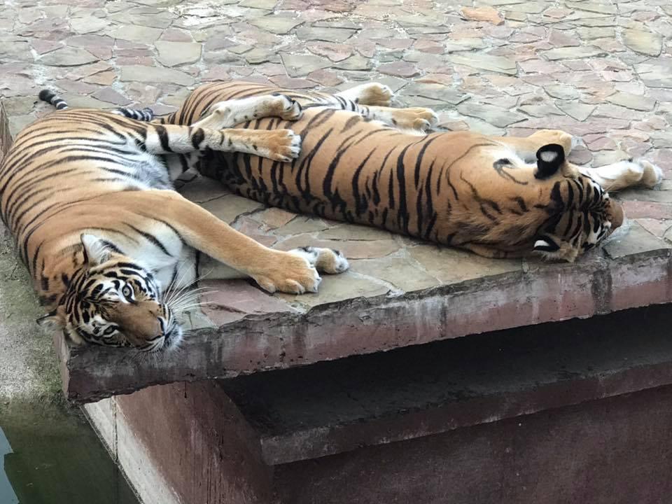 Показали, як реагують тварини на концерти біля зоопарку. ФОТО