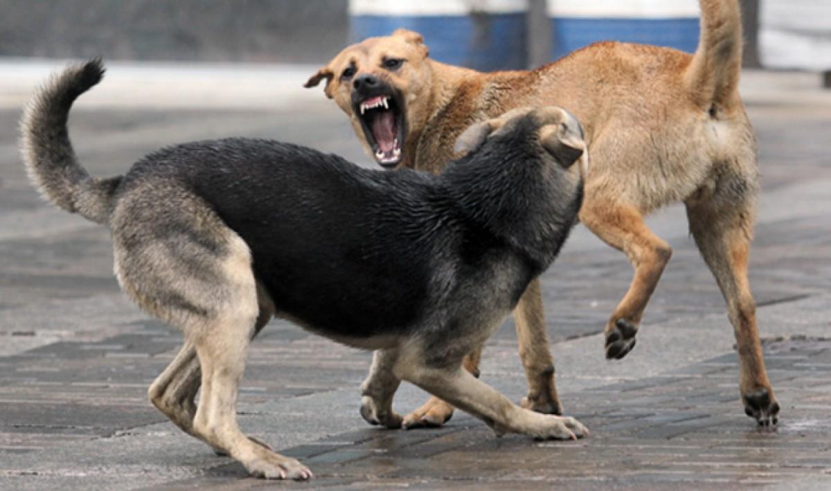 У Луцьку три собаки напали на дитину