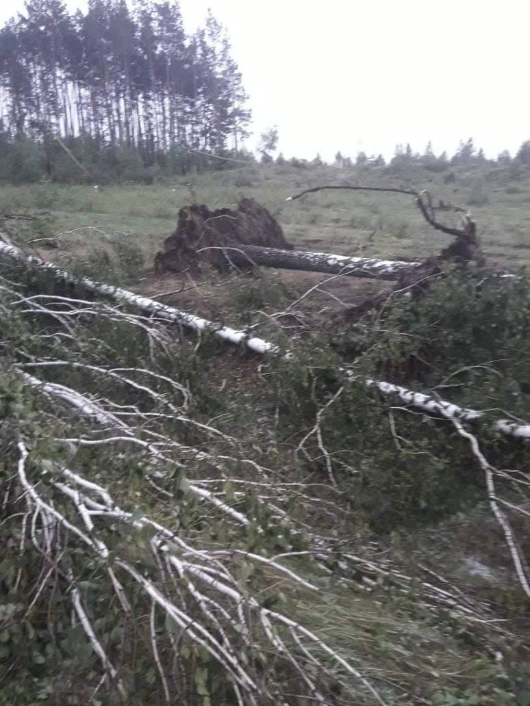 На Любешівщині буревій повиривав дерева з коренем. ФОТО