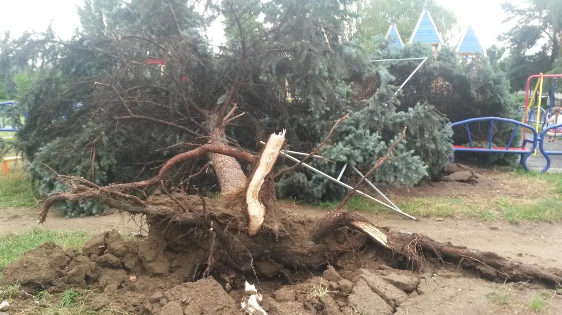 На Волині сильний вітер повиривав дерева