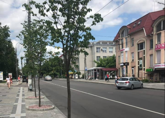 Вулицю Винниченка у Луцьку засадили липами. ФОТО