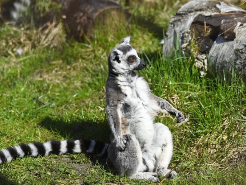 У Луцьку втретє замінували зоопарк