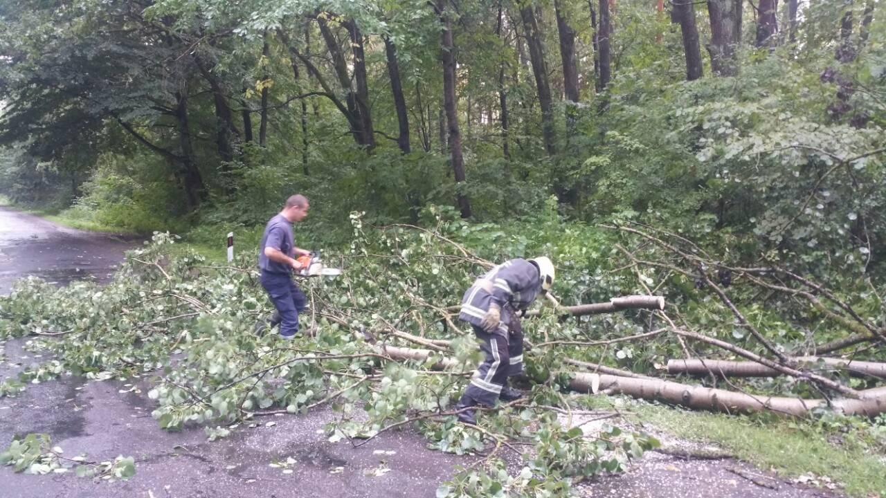 У Луцьку сильний вітер повалив дерева. ФОТО