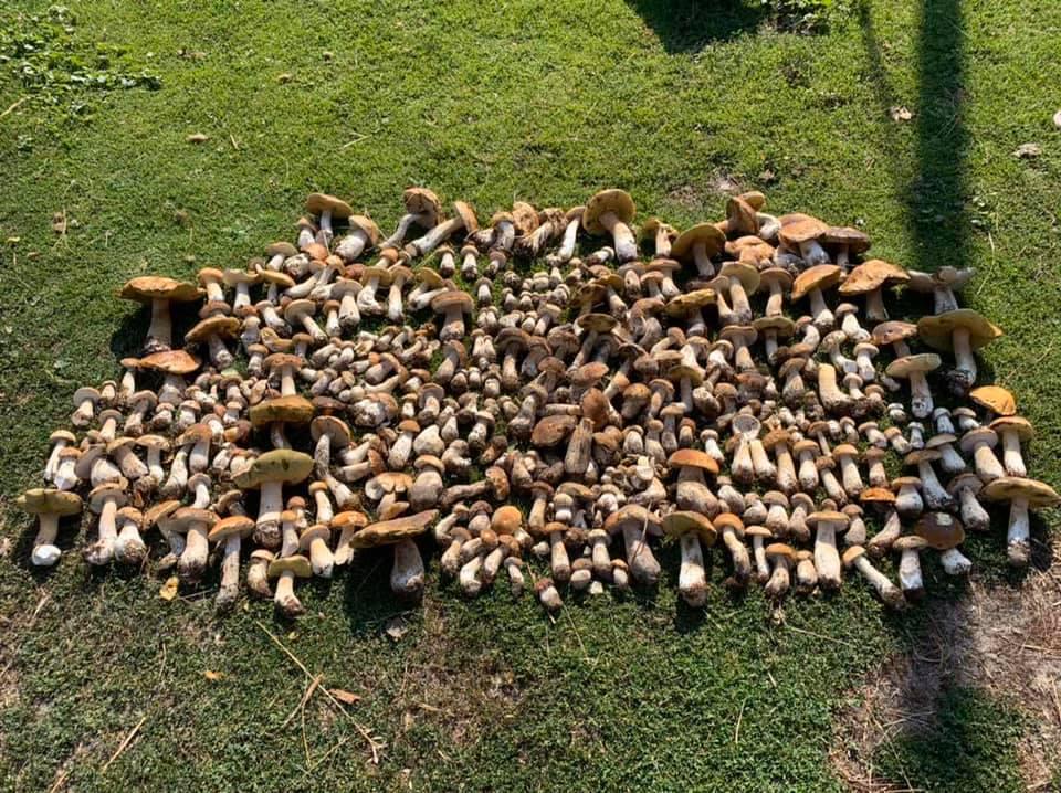 Показали грибний урожай з волинського лісу. ФОТО