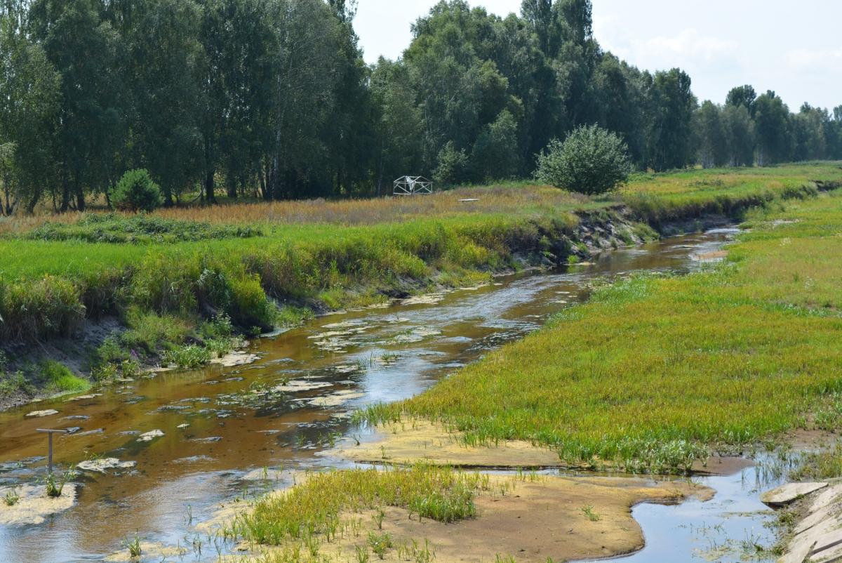 Перетворюється на болото: на Волині обмліла Прип'ять. ФОТО