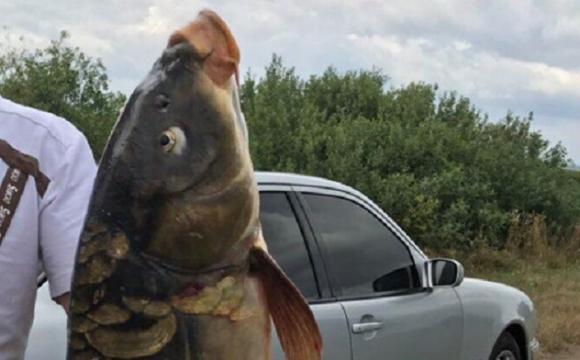 Волинянин зловив величезну рибину. ФОТО