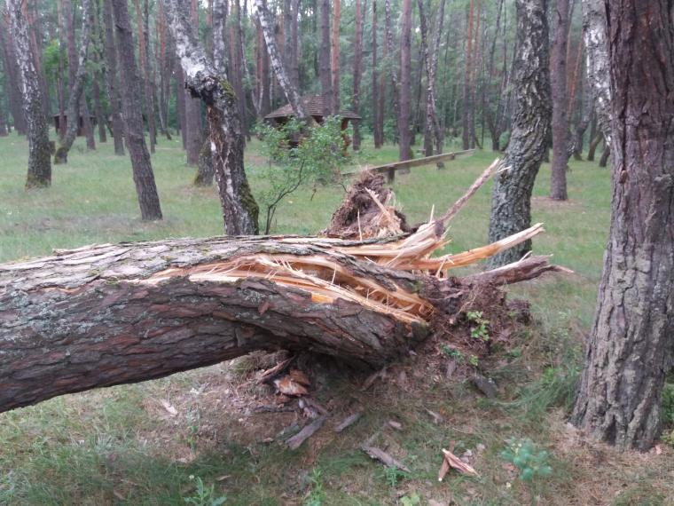 Негода  на Волині наробила проблем: сильний вітер  валив дерева та розкривав дахи. ФОТО