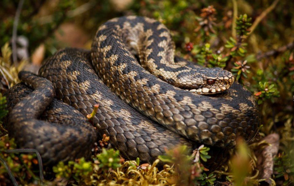 На Волині змія вкусила людину