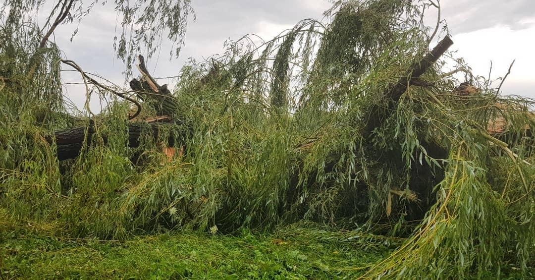 Сильний вітер на Волині повалив дерева. ФОТО