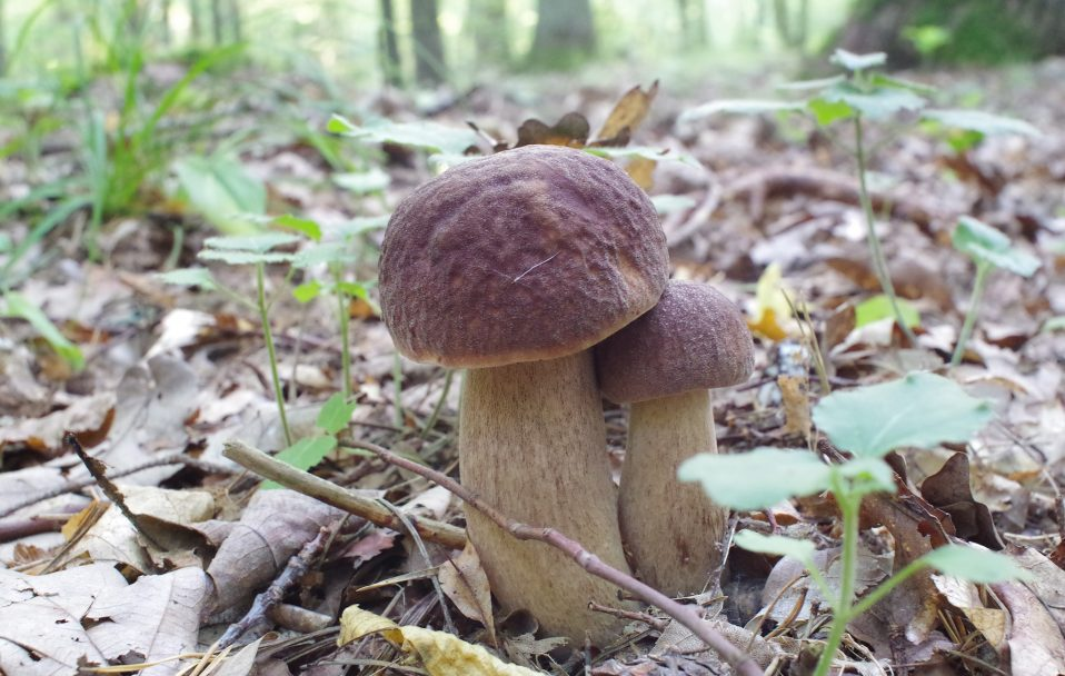 """""""Спотикався об гриби"""": чоловік показав урожай  з волинського лісу. ФОТО"""