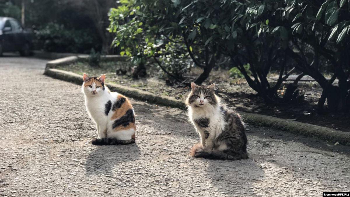 У Луцьку потруїли котів, – соцмережі