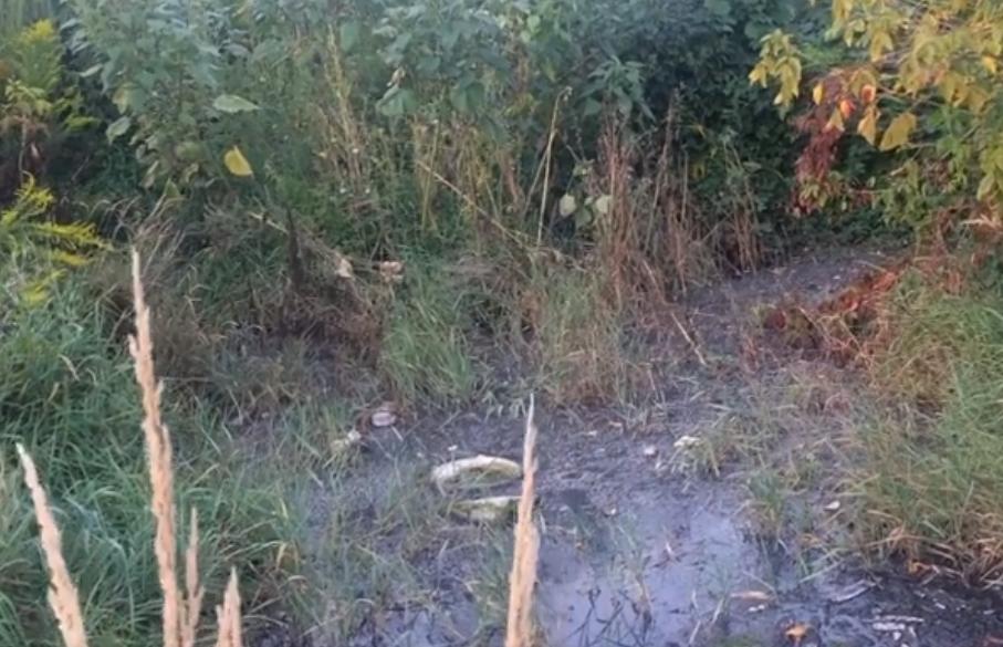 У Луцьку виявили каналізаційний люк, з якого через верх витікають відходи. ВІДЕО