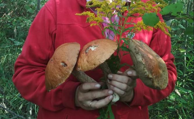 Волинянка похвалилася лісовими трофеями. ФОТО